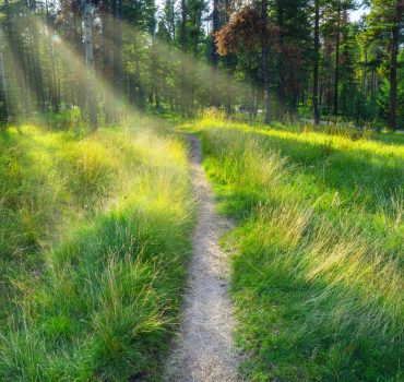 Beautiful Path Through Green Meadow In Forest With Sun Light Rays Shinning The Way