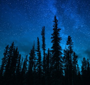 Summer Blue Night Sky With Epic Galaxy Stars Over Head Of Pine Forest